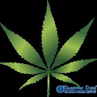 Лицензирование деятельности по культивированию наркосодержащих растений для производства наркотических средств и психотропных веществ в медицинских целях и ветеринарии.